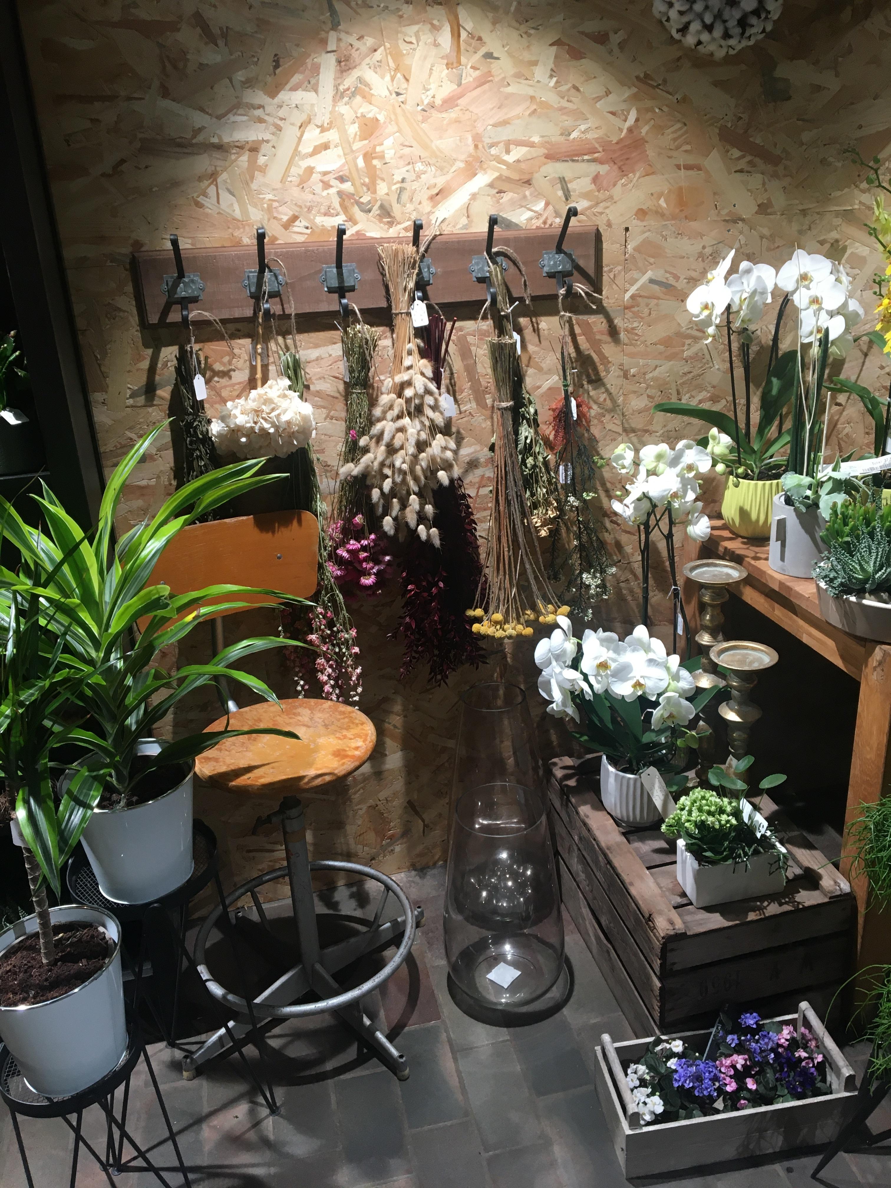 Galerie d'image - Fleurs Blanc